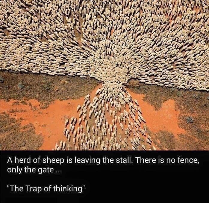 sheep-fence